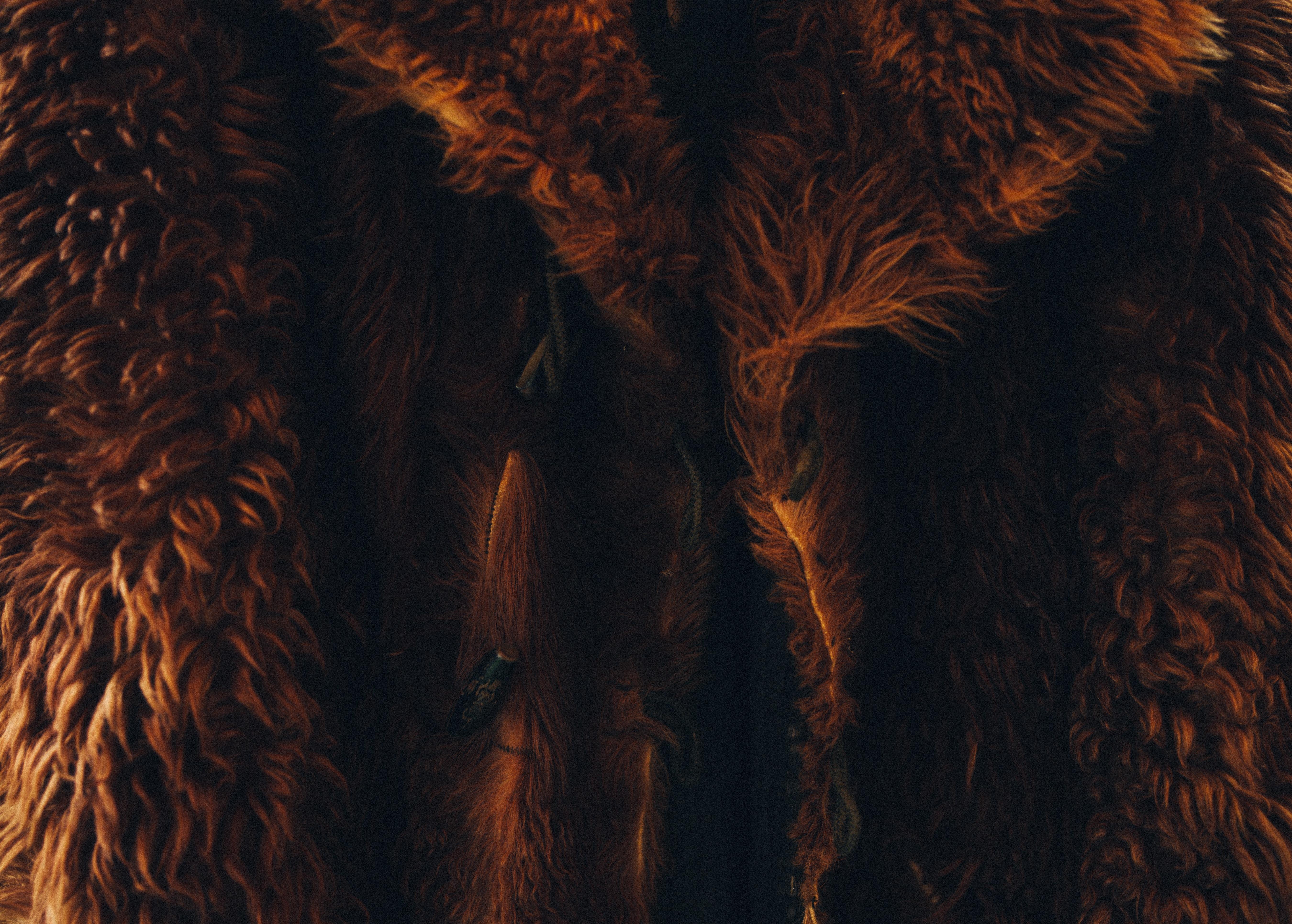 Faux Fur jakke guide 2020 | Find den bedste Fake Fur jakke